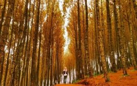 3 Tempat Wisata Bandung Yang Instagramable