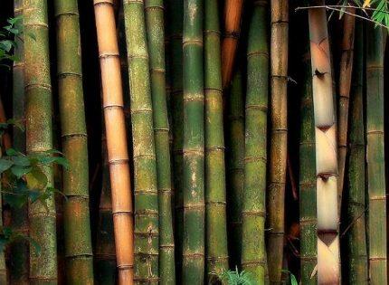 Manfaat Bambu Yang Tak Lagi Dimnafaatkan