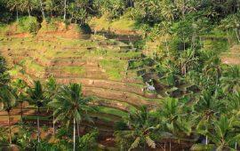 Mempelajari Harmoni Kehidupan Masyarakat Bali Melalui Subak