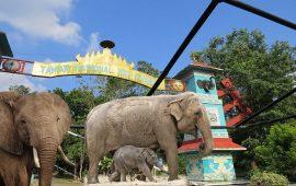 Taman Nasional Way Kambas-Tiket Masuk Fasilitas Sejarah Lengkap