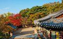 Pada Musim Semi & Gugur Tempat Wisata di Korea Selatan Ini Asyik Untuk Dikunjungi