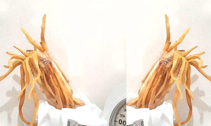 Sistik Delia Bakery Cicadas